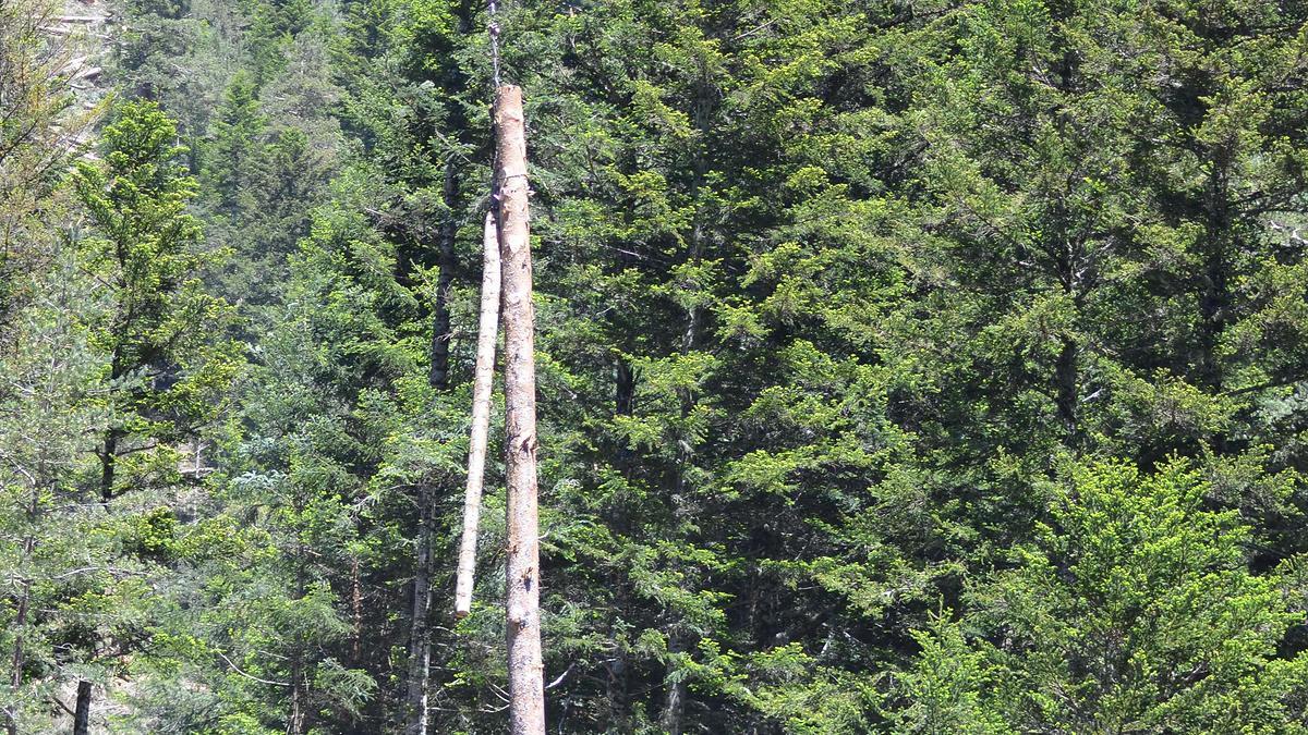 Vue des grumes suspendues en l'air par le câble
