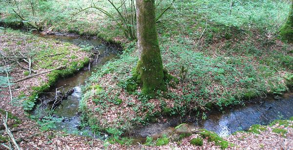 Un petit cours d'eau qui serpente en forêt