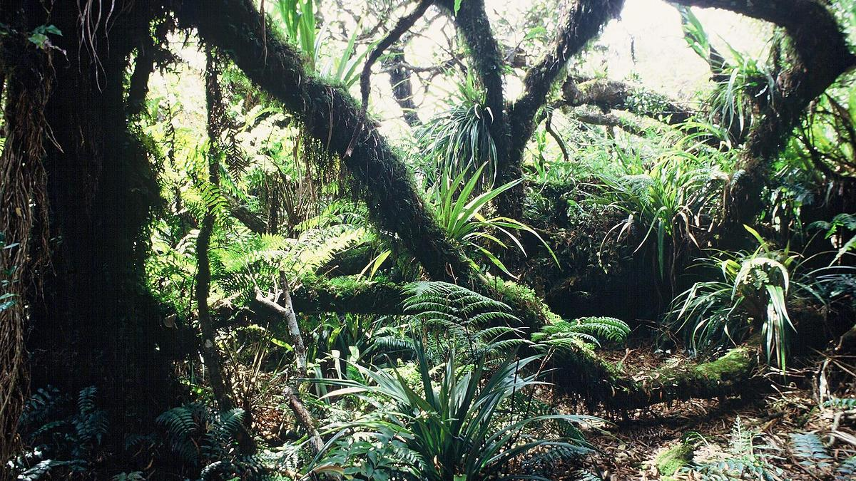 Forêt de Tamarins, Ile de La Réunion