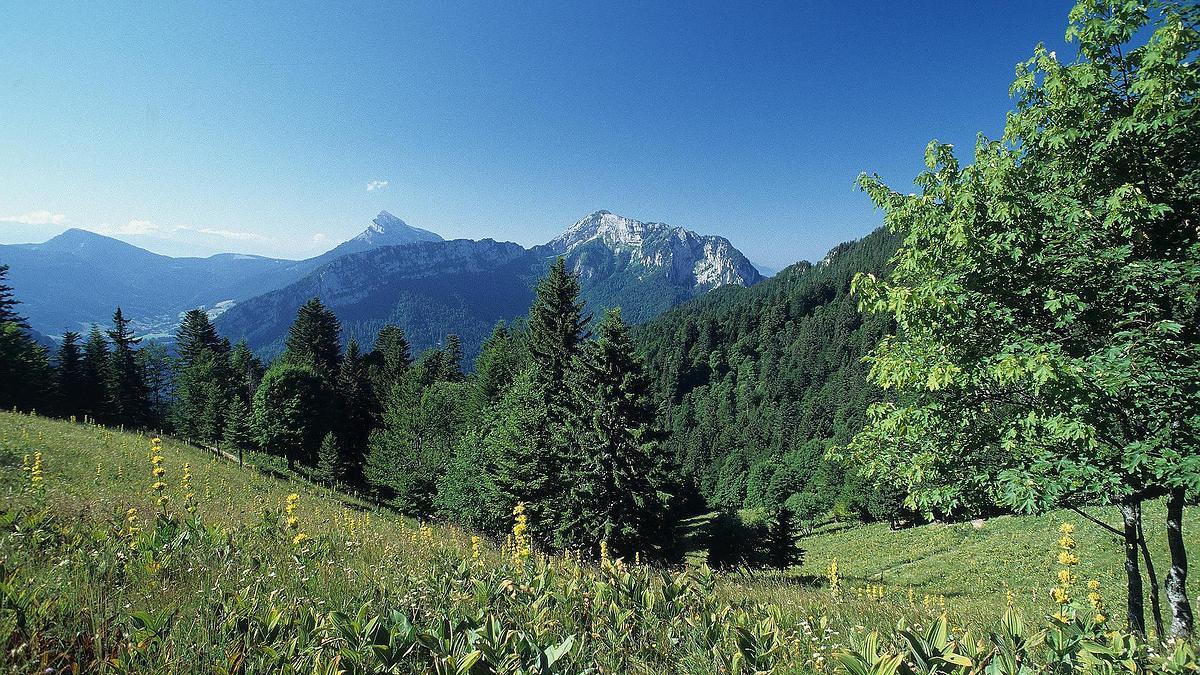 Forêt domaniale de la Grande Chartreuse