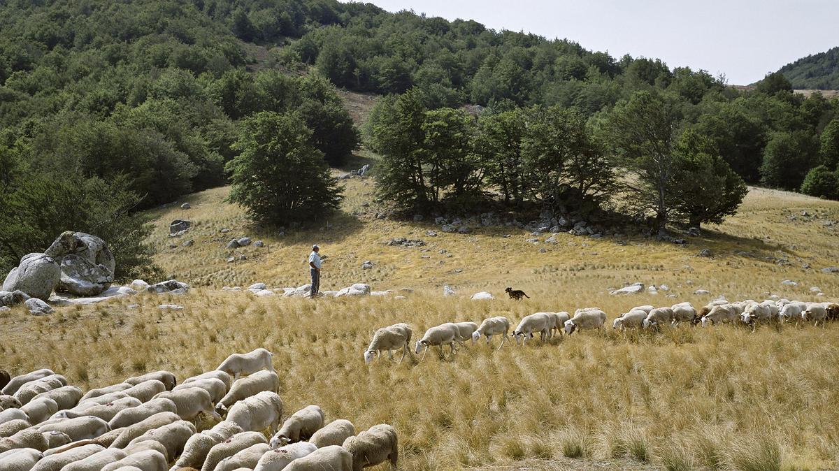 Forêt domaniale de l'Aigoual (Occitanie)