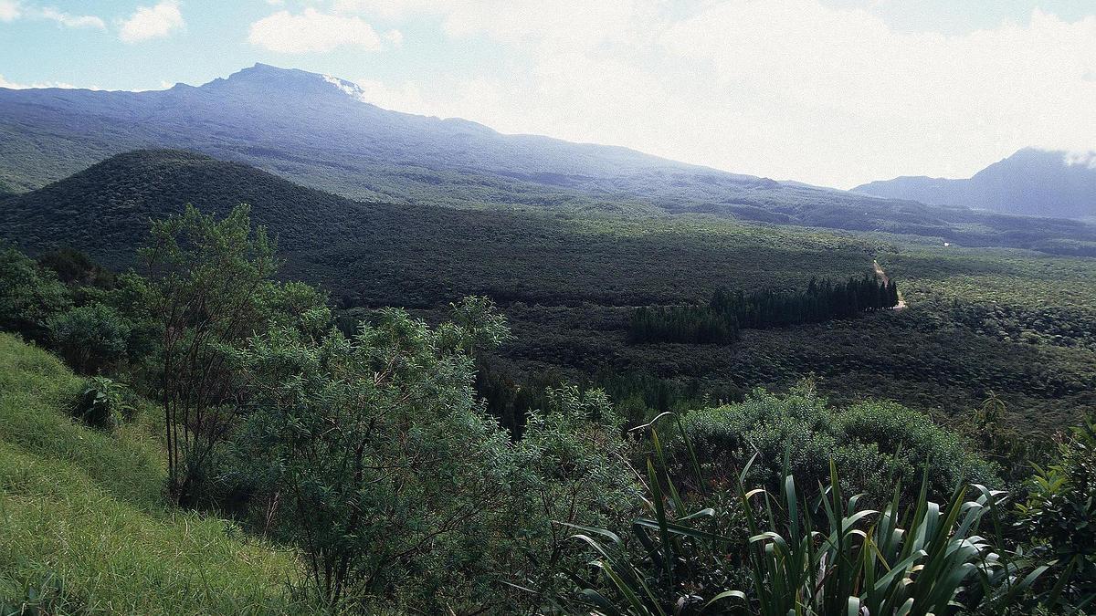 Forêt départemento-domaniale de Bélouve, La Réunion