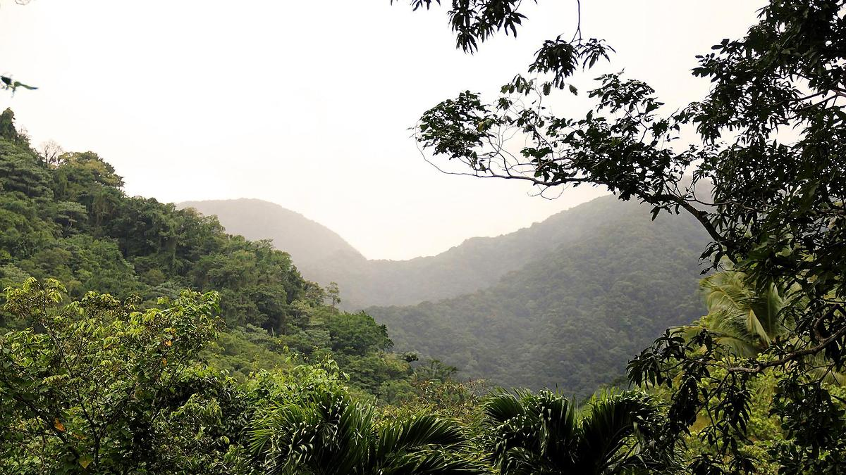 Forêt tropicale humide, vallée de Beaugendre, Guadeloupe