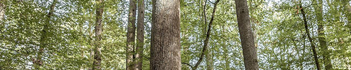 Forêt communale de La Londe-Rouvray (Seine-Maritime)