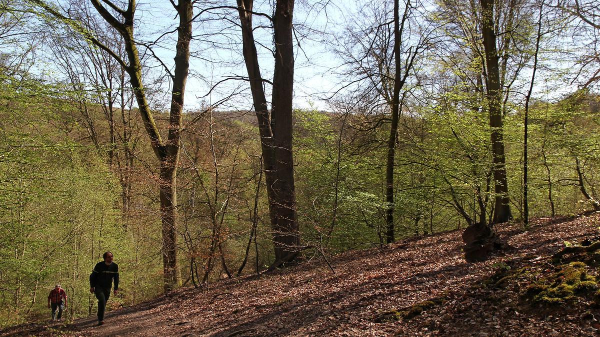 Forêt domaniale de La Londe-Rouvray (Seine-Maritime)