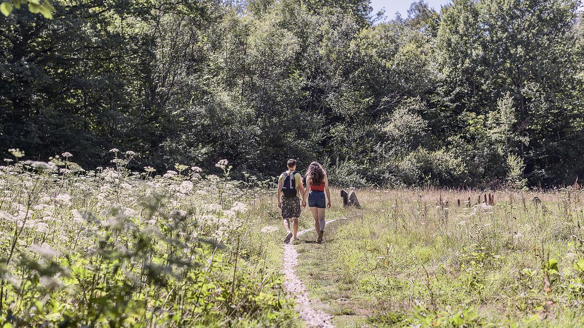 Forêt de Montmorency (Val-d'Oise)