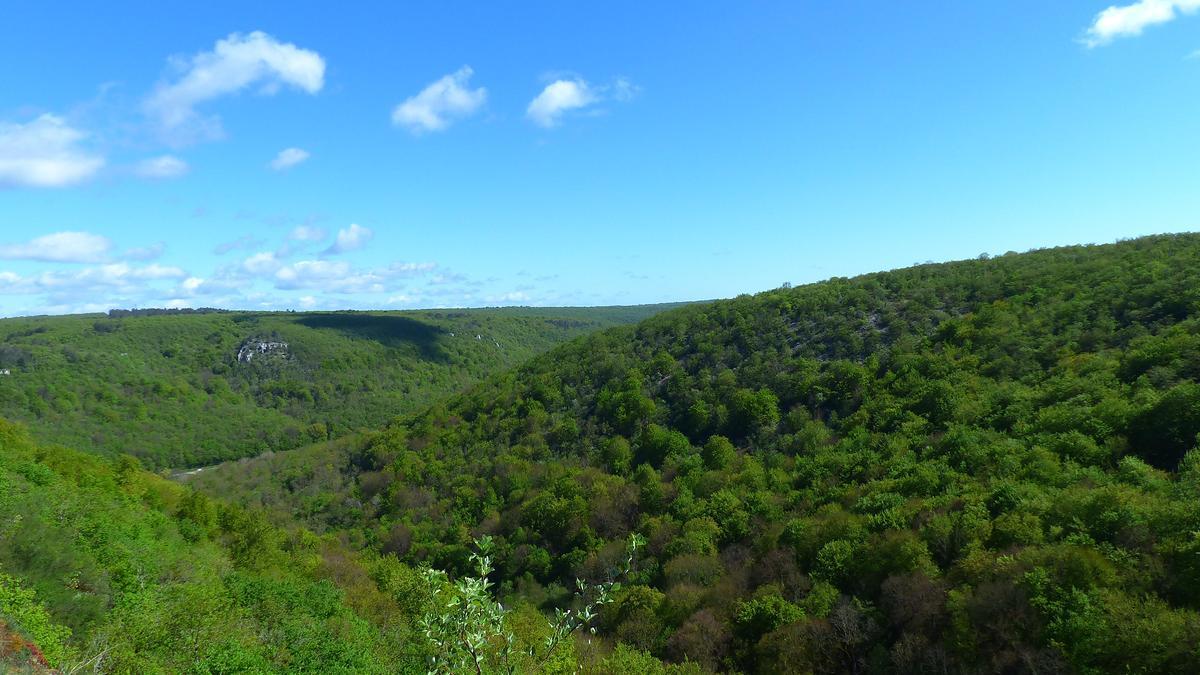 Forêt domaniale de Val Suzon (Côte-d'Or)