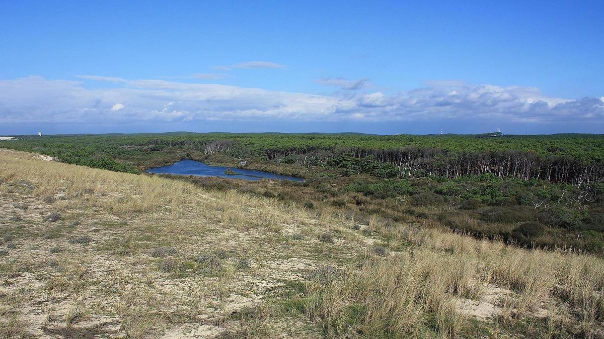 Forêt domaniale de Mimizan (Landes)