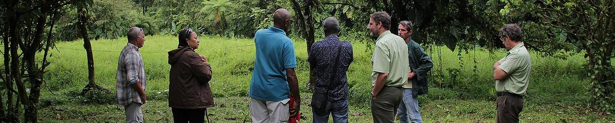 Tournée agroforesterie en Guadeloupe