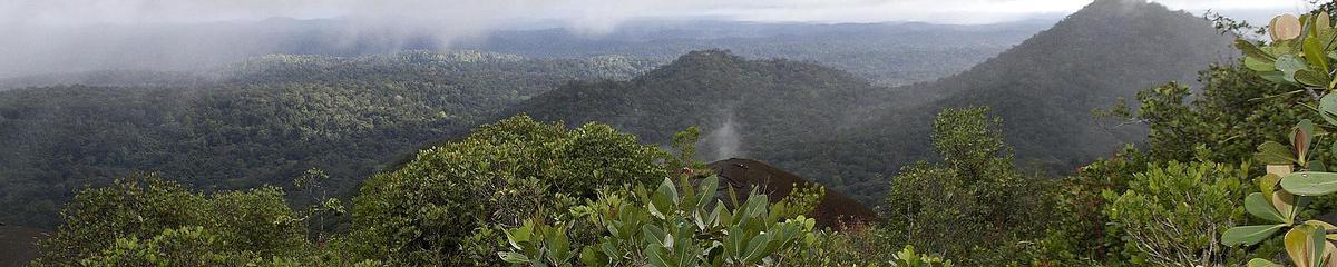 Vue sur la forêt primaire guyanaise depuis un inselberg d'origine volcanique