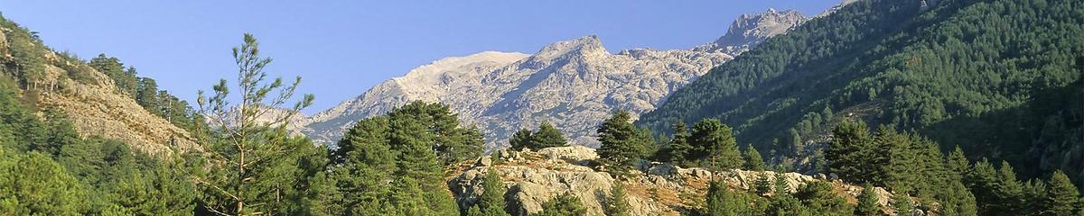Forêt communale de Vivario (Haute-Corse)