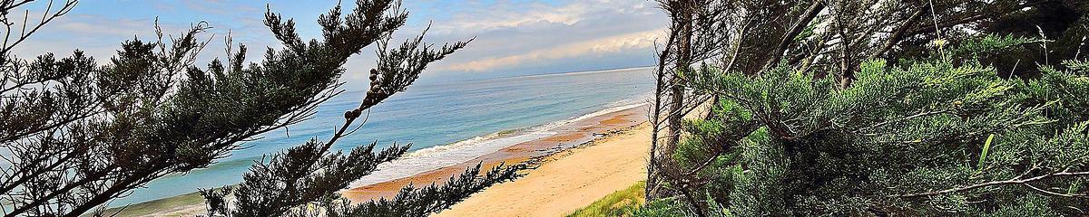 La dune en protection avec la forêt littorale de l'Ile de Ré face au vent