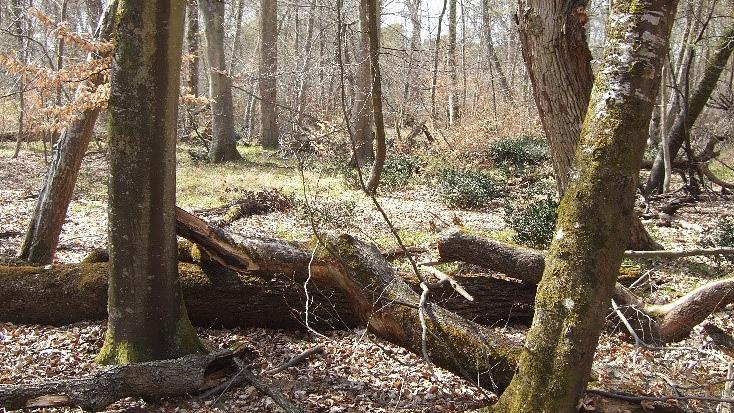 La forêt domaniale de Fontainebleau (Seine-et-Marne)