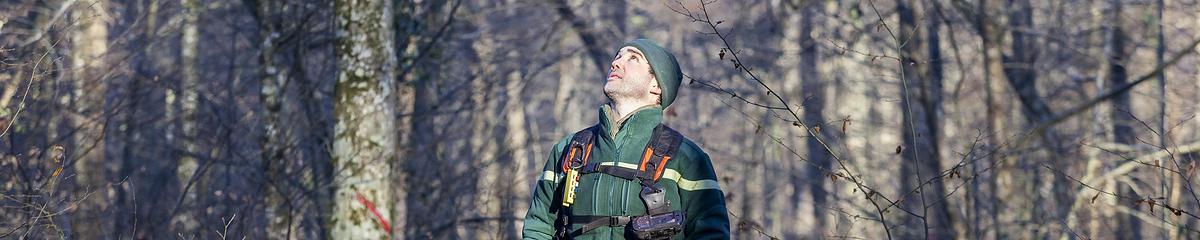 Mathiew Augery, technicien forestier territorial à l'ONF, lors d'une opération de martelage en forêt de Sourdon (Seine-et-Marne)